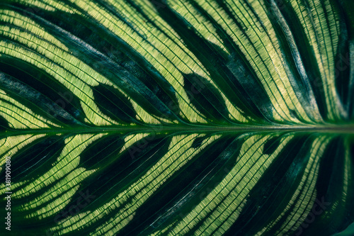 Canvastavla tropical leaves colorful flower on dark tropical foliage nature background dark