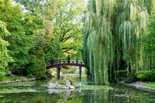 A Willow Tree By A Pond With W...