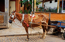 Horse Pulling A Wooden Cart, M...