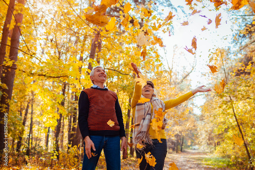 Obraz Fall season. Family couple throwing leaves in autumn forest. Senior people having fun outdoors enjoying nature - fototapety do salonu