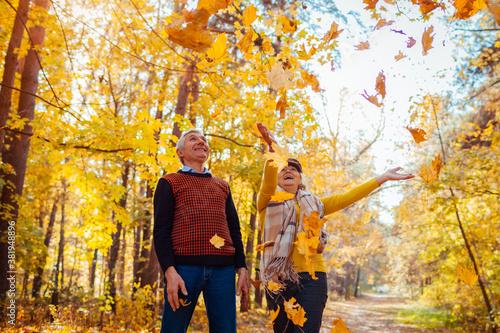 Valokuvatapetti Fall season