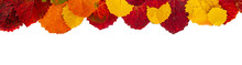 Autumn Leaves Are Located On Top Along The Edge On A White Background. Autumn Isolated Composition. Banner Red And Yellow Leaves.