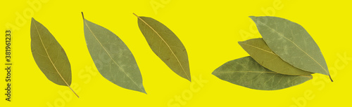 Dry bay leaf on an isolated background Wallpaper Mural