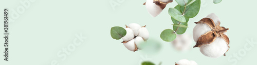 Fototapeta Flying cotton flowers, green twigs of eucalyptus on mint green background. Creative Floral background with cotton, delicate flowers of fluffy cotton. Flat lay flowers composition, greeting card obraz