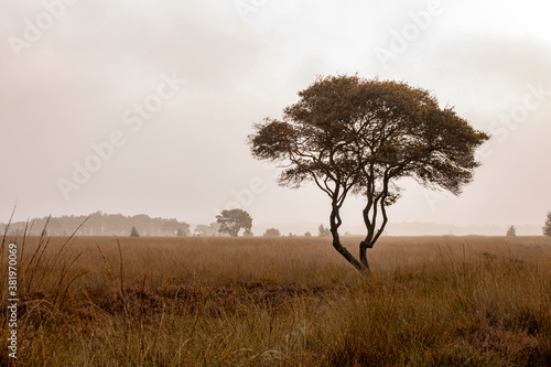 Autumn fall theme with grass blades in early morning sunrise moorland landscape with a single tree with meandering branches contrasted against a moist misty fog background Billede på lærred