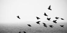 Birds Taking Off