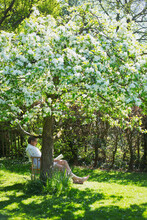 Man Reading Book Below Flowering Tree In Sunny Tranquil Garden