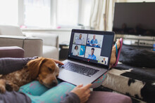 Dog Sleeping On Woman With Laptop Video Chatting With Doctors