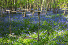 Wood Stick Frame Over Idyllic Bluebell Flowers Growing In Forest