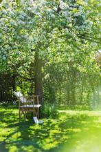 Chair Below White Flowering Tree In Sunny Idyllic Garden