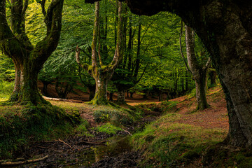 Fairytale forest by day, trees with moss and dry leaves on the ground