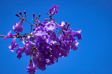 Indigo Flowers On Blue Sky. Bl...