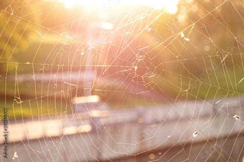 Fotomural Close-up of the spider web or cob web with midges and flies on warm background o