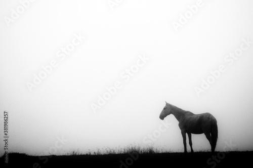Equinos Billede på lærred