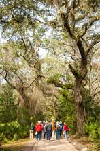 Cumberland Island, Georgia, A Group Of Tourists Walking On A Trail Through A Live Oak Tree And Spanish Moss Tunnel.
