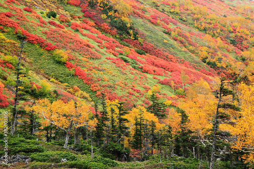 銀泉台の紅葉