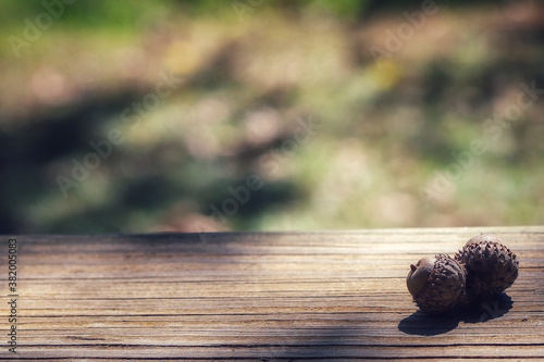 A close up image of an acorn on a wooden plank and green background Canvas Print