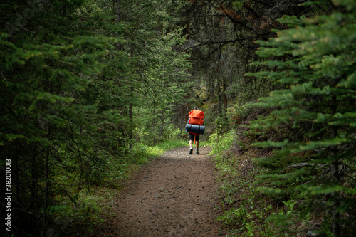 Man hiking with camping gear on trail among trees in woods - 382010013