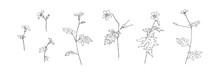 Set Of Hand Drawn Wild Flowers...