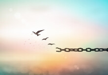 Individual Human Right Day Concept: Silhouette Of Bird Flying And Broken Chains Over Blurred Sunrise Background