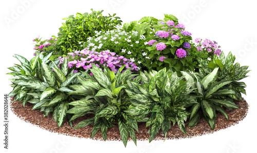 Fotografia Cutout flower bed