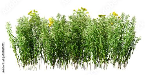 Fotografía Wildplant