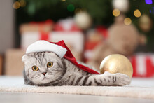 Cute Funny Cat In Santa Hat At...