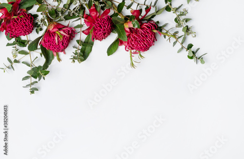 Beautiful floral flat-lay arrangement of Australian native red waratah flowers and eucalyptus leaves, creating a border on a rustic white background Fotobehang