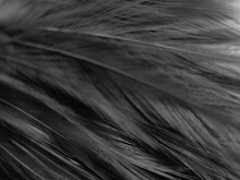 Beautiful Abstract Black Feath...