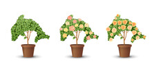 Vector Bush In A Pot With Flowers