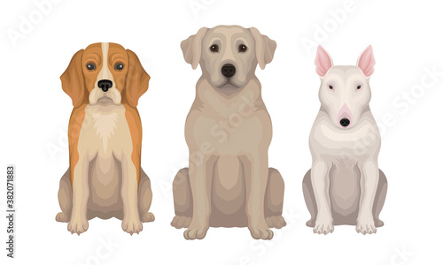 Purebred Dogs Sitting on Hind Legs Vector Set Wallpaper Mural