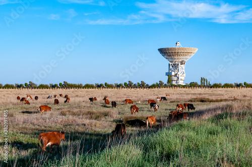 Obraz na plátně cows graze on a field near the space antenna on a summer day