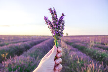Bunch Of Lavender Flowers In F...