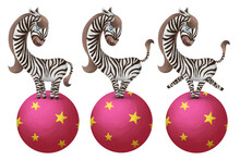 Cute Zebra Makes Circus Tricks On Pink Ball. Clip Art On White Background