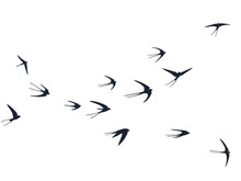 Flying Swallow Birds Silhouett...