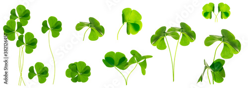 Leinwand Poster green clover leaves isolated on white background