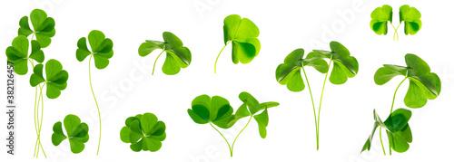 Fotografia green clover leaves isolated on white background