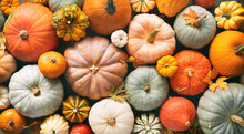 Various Fresh Ripe Pumpkins As Background