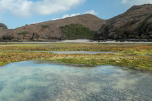 Low Tide Reveals Algae And Tide Pools In The Indian Ocean. The Tidepools Are Isolated Pockets Of Seawater That Collect In Low Spots Along The Shore During Low Tide