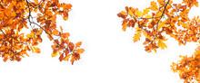 Autumn Nature Background With Oak Leaves. Fall Season Concept. Autumn Forest Landscape. Copy Space. Banner.