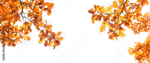 Fototapety pomarańczowe  autumn-nature-background-with-oak-leaves-fall-season-concept-autumn-forest-landscape-copy