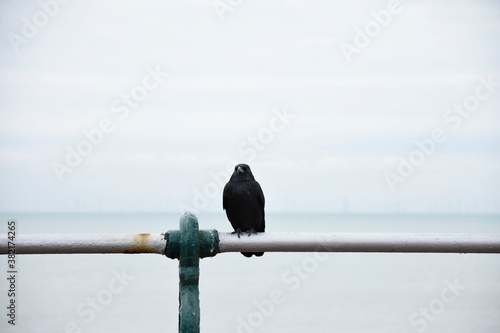 Photo Brighton Crow