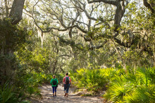 Two Women Hikers Walk Througha Live Oak And Spanish Moss Forest On Cumberland Island, Georgia, With Palmettos In Forground.