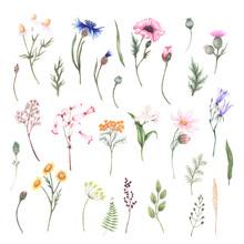 Set With Wildflowers - Poppy, ...