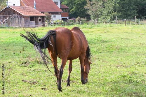 pferd Fototapeta
