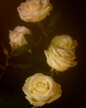 White Roses With Vintage Editing