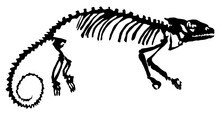 Silhouette Of The Skeleton Of The Chameleon