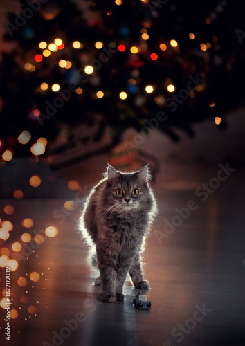 Fotografija Beuatiful gray cat under the christmas tree with bokeh lights, blurred foregroun