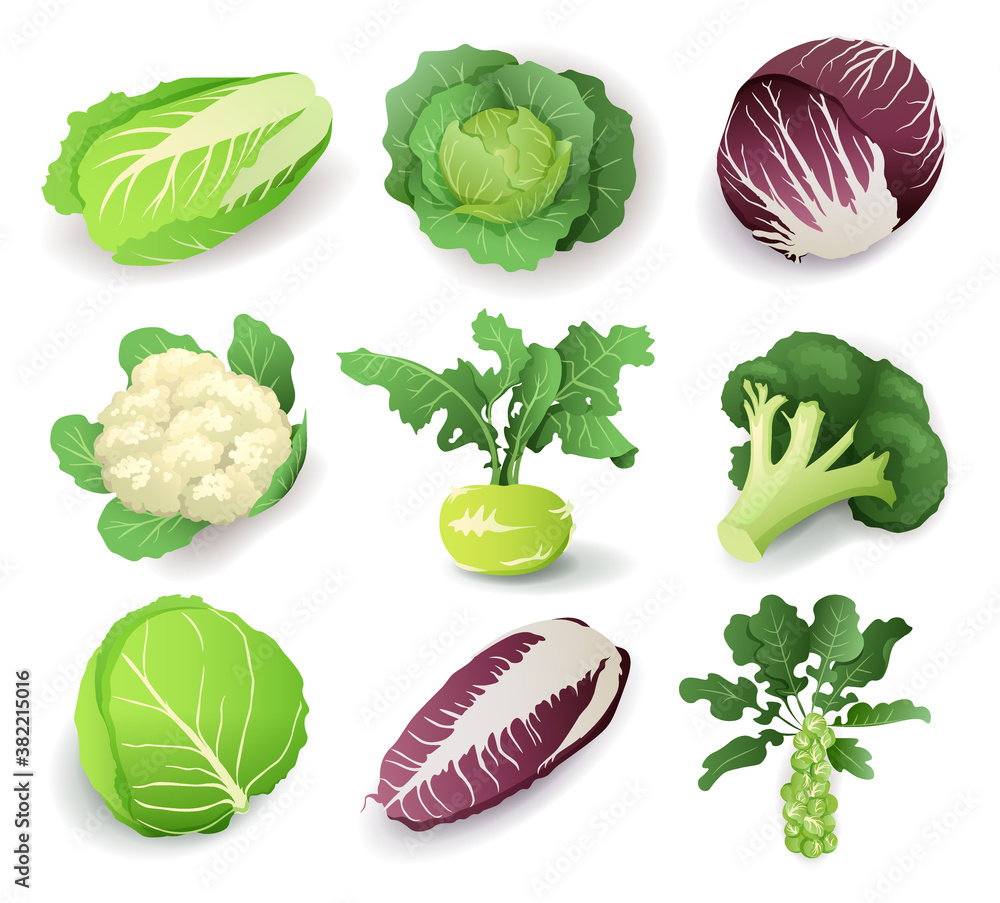 Fototapeta Set with different kinds of cabbage, isolated on white background. Cruciferous vegetables cartoon vector illustration collection.