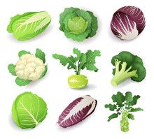 Set With Different Kinds Of Cabbage, Isolated On White Background. Cruciferous Vegetables Cartoon Vector Illustration Collection.